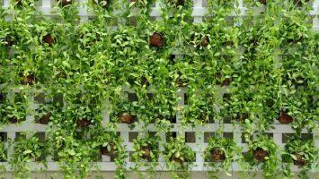 Vegetační stěny - hodí se i do interiéru - ilustrační foto